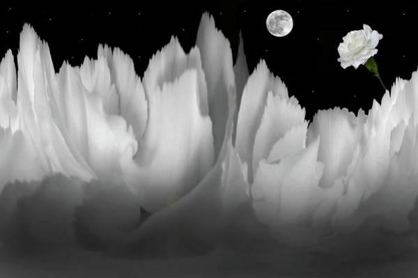 Wall Art - Photograph - Carnation Fantasy by Terence Davis