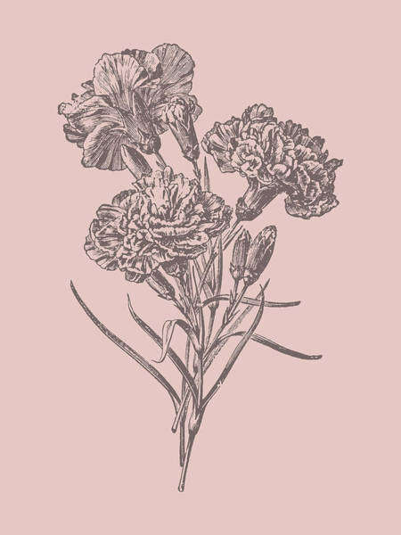 Bouquet Mixed Media - Carnations Bush Pink Flower by Naxart Studio