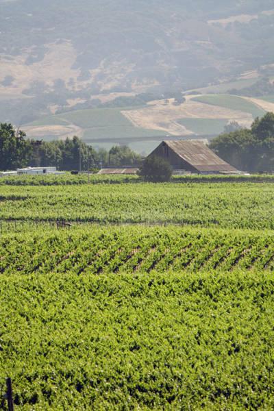 Napa Valley Photograph - Carneros Valley Summer by Yinyang