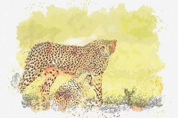 Wall Art - Painting - Carnivore  Cheetahs -  Watercolor By Ahmet Asar by Ahmet Asar