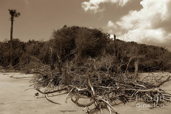 Photograph - Carolina Beach Deadwood In Sepia by Dale Powell