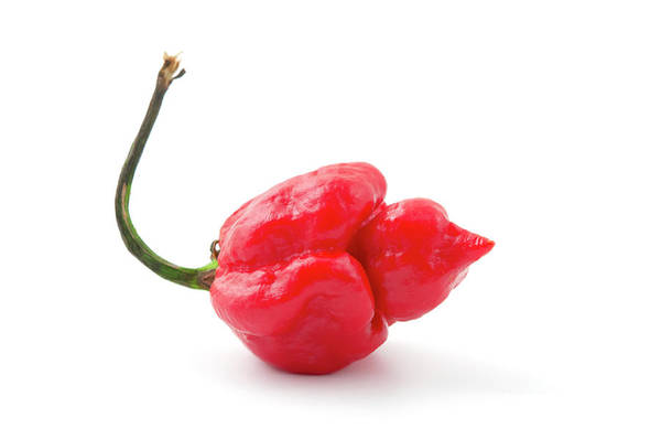 Photograph - Carolina Reaper by Fabrizio Troiani