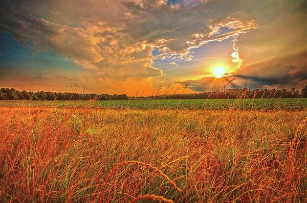 Photograph - Carolina Summer by John Harding Photography