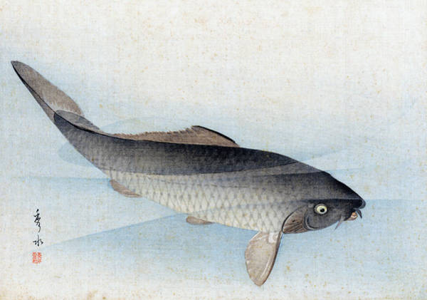 Painting - Carp by Shusei