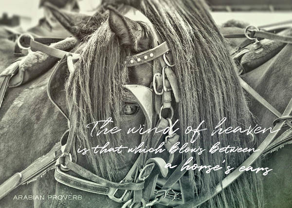 Photograph - Carriage Horse Quote by JAMART Photography