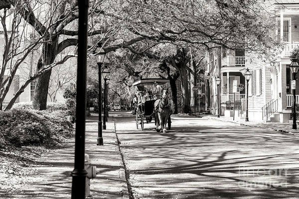 Carriage Ride Through Charleston Art Print