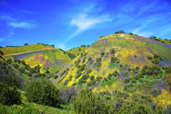 Photograph - Carrizo's Easter Egg Hill - Superbloom 2019 by Lynn Bauer