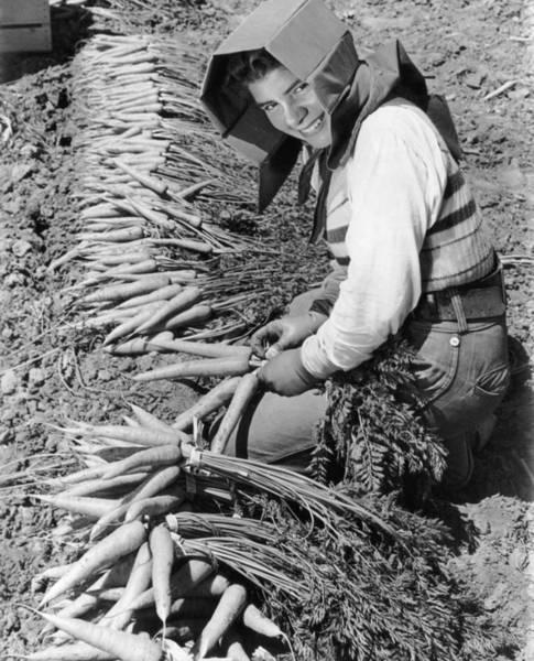 Sun Hat Photograph - Carrot Harvest by Orville Logan Snider