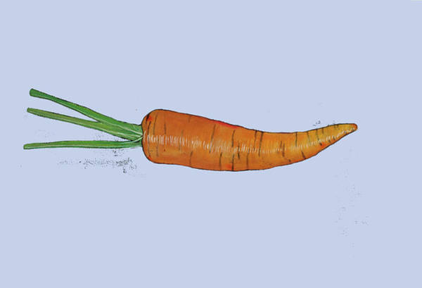 Ingredient Painting - Carrot by Sarah Thompson-engels