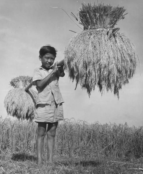 Indonesian Culture Photograph - Carrying Sheaves by Richard Harrington