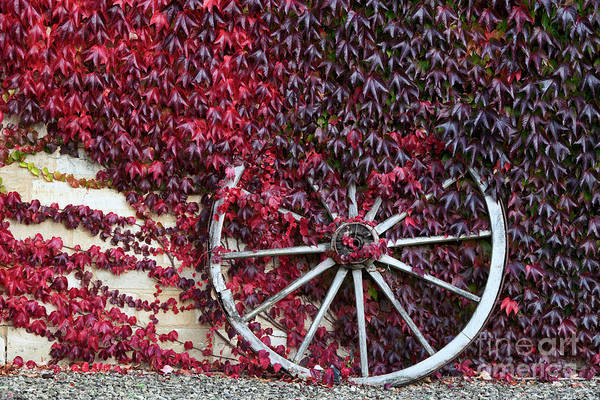 Wall Art - Photograph - Cart Wheel by Tim Gainey
