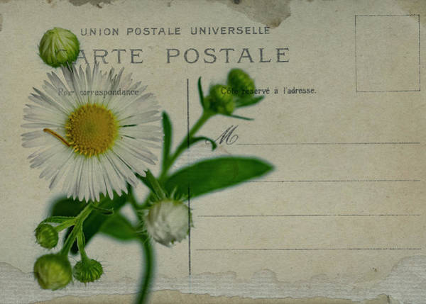 Photograph - Carte Postale by Cathy Kovarik