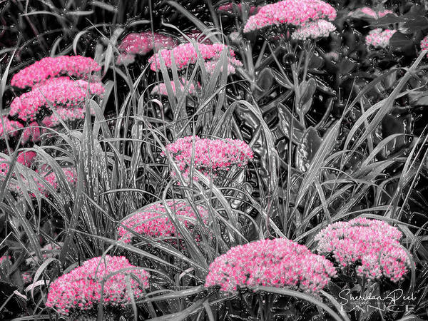 Photograph - Carved Pink Butterfly Bush by Lance Sheridan-Peel