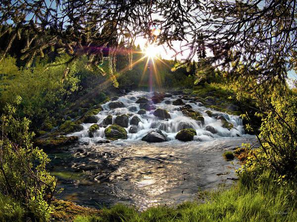 Conifer Photograph - Cascade In Evening Sun by Leland D Howard