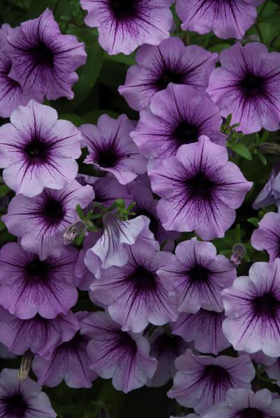 Cascade In Violet Art Print