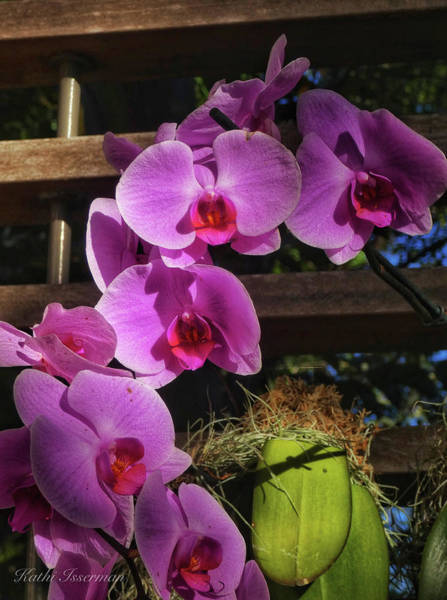 Macro Wall Art - Photograph - Cascading Orchids by Kathi Isserman