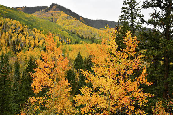 Photograph - Castle Creek Road Aspen Hills by Ray Mathis
