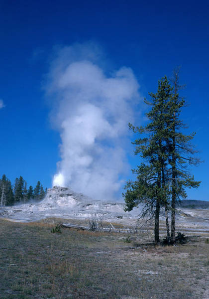 Wall Art - Photograph - Castle Geyser, Yellowstone by David Hosking