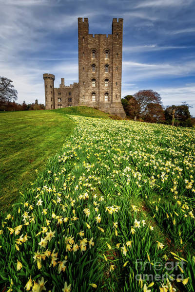 Photograph - Castle Keep Daffodils by Adrian Evans