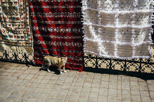 Wall Art - Photograph - Cat And Tapestries by Pati Photography