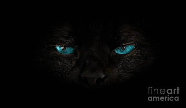 Photograph - Cat Blue Eyes by Benny Marty