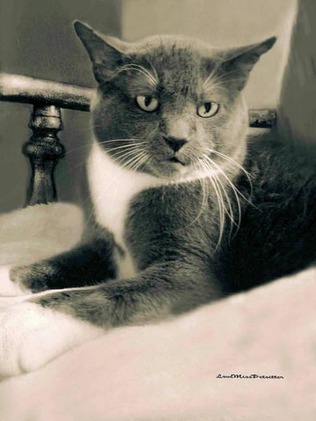 Digital Art - Cat Boticas Portrait  7 by Miss Pet Sitter