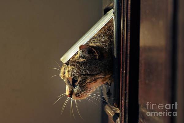 Wall Art - Photograph - Cat Crawls Out Of The House Through A by Davidtb