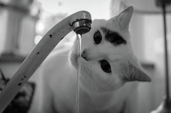 Faucet Photograph - Cat Drinking Water From Faucet by A*k