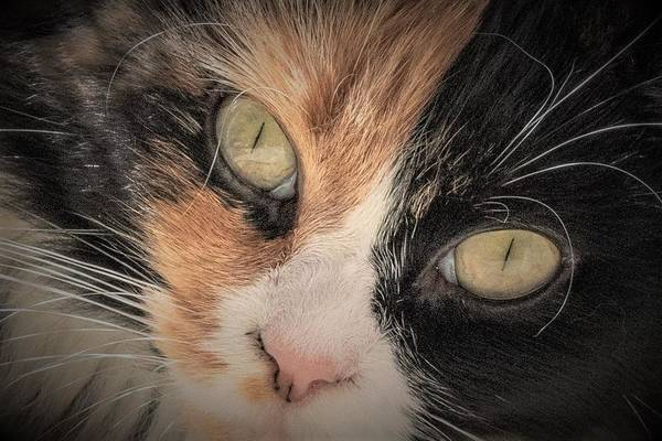 Wall Art - Photograph - Cat Eyes by Mary Ann Artz