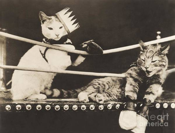 Two People Wall Art - Photograph - Cat Fight by Everett Collection