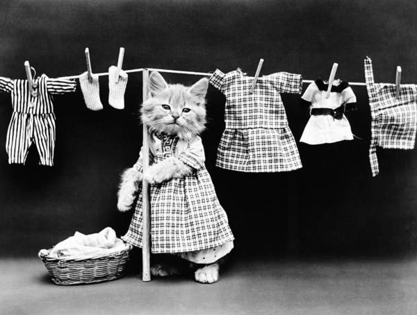 Cute Kitten Photograph - Cat Hanging Laundry On Clothesline - Harry Whittier Frees by War Is Hell Store