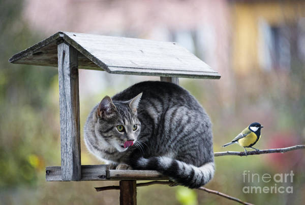 Wall Art - Photograph - Cat Hunting A Bird by Kuttelvaserova Stuchelova
