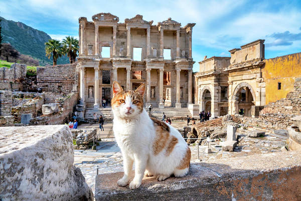 Photograph - Cat In Front Of The Library Of Celsus by Fabrizio Troiani