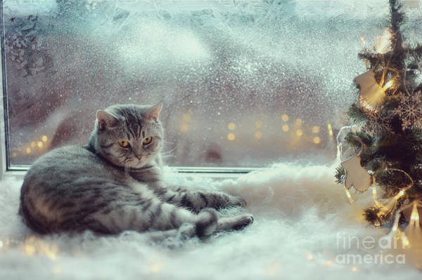 Wall Art - Photograph - Cat In The Winter Window by Alekuwka