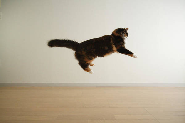 Skill Photograph - Cat Jumping In Air by Junku
