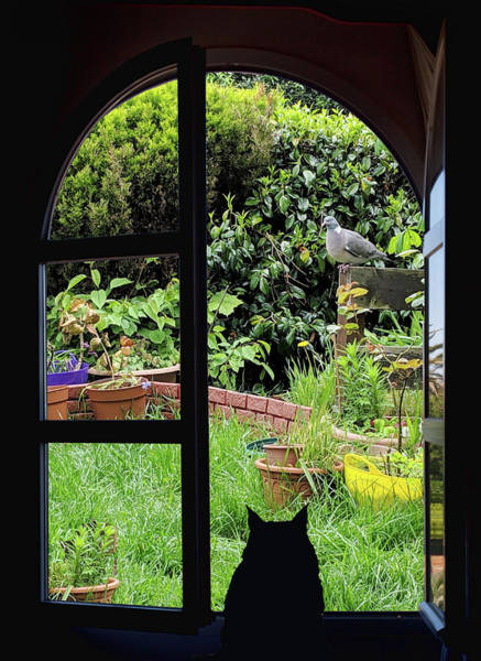 Photograph - Cat Looking Out The Window by Tatiana Travelways