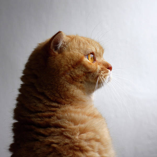 Photograph - Cat Looking Towards Light by Leoch Studio