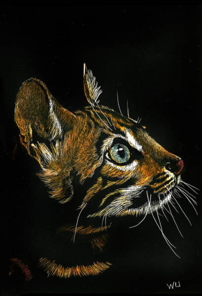 Drawing - Cat Looking Up by William Underwood