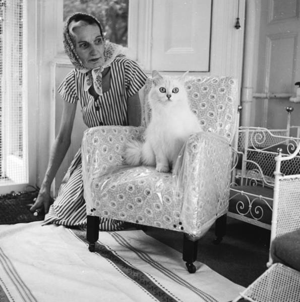 Photograph - Cat Lover by Chaloner Woods
