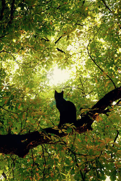 Kitten Wall Art - Digital Art - Cat On A Tree by Cambion Art