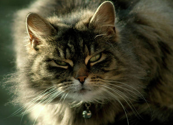 Jason Day Photograph - Cat Outdoors by Photograph By Jason Mccalla