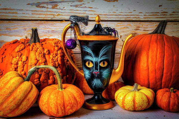 Wall Art - Photograph - Cat Pitcher With Pumpkins by Garry Gay