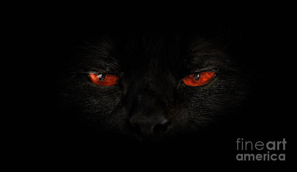 Photograph - Cat Red Evil Eyes by Benny Marty