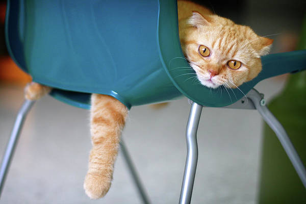 Ginger Cat Photograph - Cat Resting On Plastic Chair by Leoch Studio