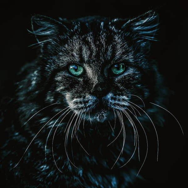 Photograph - Cat by Rob D Imagery
