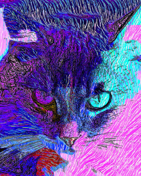 Photograph - Cat Scratch Fever 20190204z by Wingsdomain Art and Photography