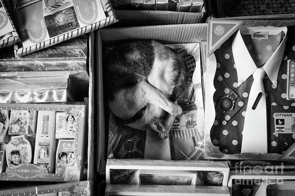 Wall Art - Photograph - Cat Sleeping On A Bangkok Market Stall by Dean Harte