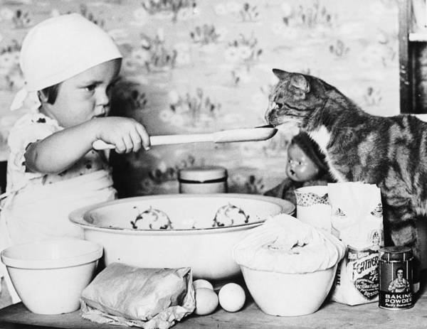 Domestic Life Photograph - Cat Taster by Fox Photos