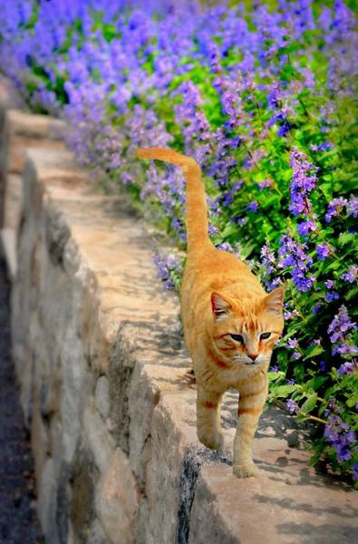 Wall Art - Photograph - Cat Walk by Diana Angstadt
