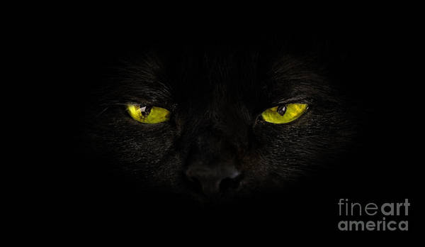 Photograph - Cat Yellow Eyes by Benny Marty